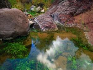 Plantas en el lecho de un río