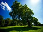 Árboles iluminados por el brillante sol
