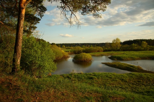 Las verdes orillas de un río