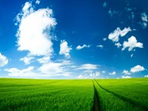 Gran campo de hierba verde