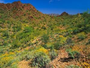 Postal: Grandes cactus y plantas