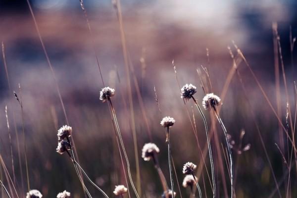 Flores secas en un campo