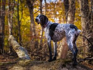 Postal: Un perro en el bosque observando con atención
