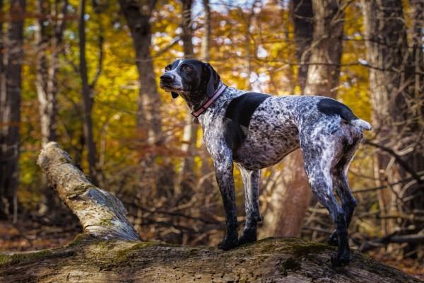 Un perro en el bosque observando con atención