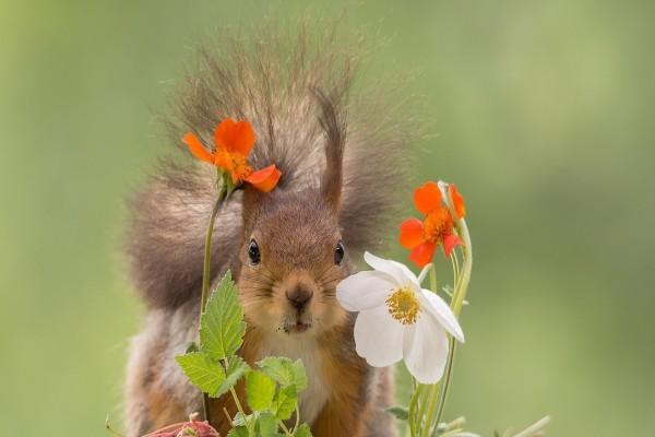 Una ardilla observando las flores