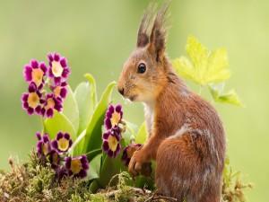 Una hermosa ardilla entre las flores