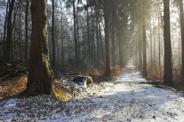 Nieve sobre el camino del bosque