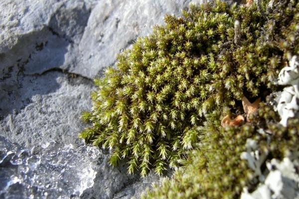 Plantas y hielo sobre una roca