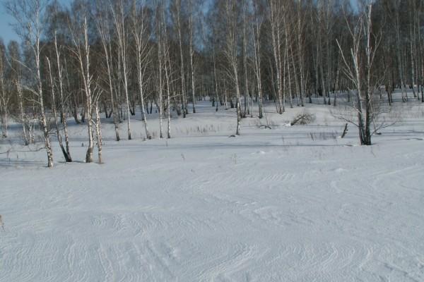 Árboles desnudos sobre la nieve