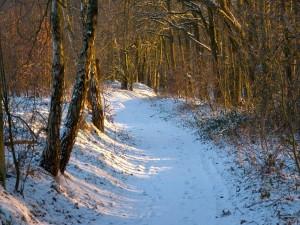 Nieve en un camino del bosque