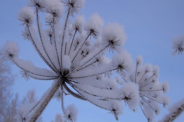 Nieve sobre una planta