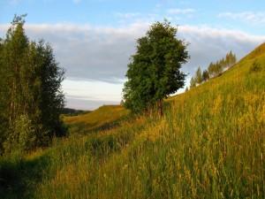 Postal: Árboles en una ladera verde