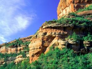Postal: Árboles verdes en las paredes rocosas