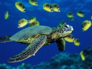 Postal: Tortuga de mar