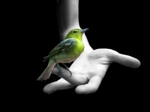 Postal: Pájaro verde sobre una mano