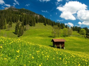 Pequeña cabaña en el campo