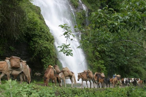 Caballos porteadores caminando junto a una cascada