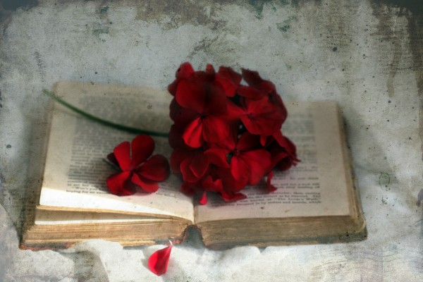 Una bella flor de color granate sobre un antiguo libro