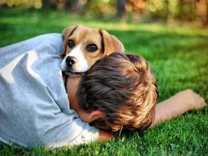 El amor de un perro por su amigo humano