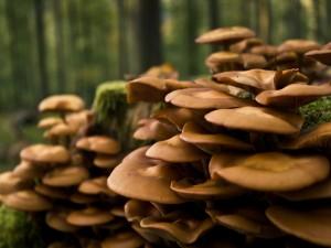 Grandes setas creciendo en el bosque