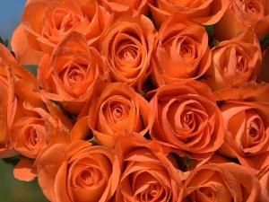 Postal: Un hermoso ramo de rosas naranjas