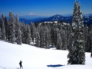 Hombre sobre la nieve observando los pinos