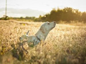 Un perro disfrutando en el campo