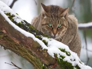 La mirada de un gato que está en la fría nieve