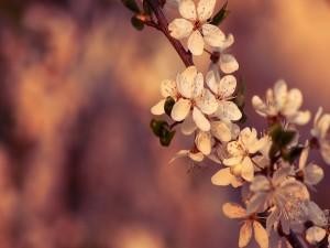 Postal: Flores en una rama