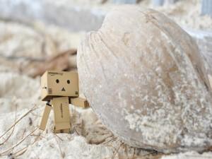 Danbo encontró un fruto en la arena