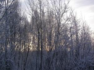 Nieve sobre los árboles desnudos