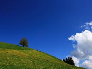 Cielo azul sobre un campo verde