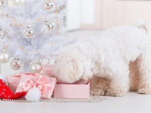 Un bello perro husmeando los regalos junto a un árbol de Navidad