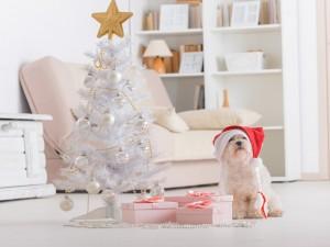 Gracioso perrito esperando la noche mágica de Navidad