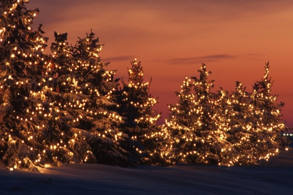 Árboles de Navidad iluminados en un frío anochecer