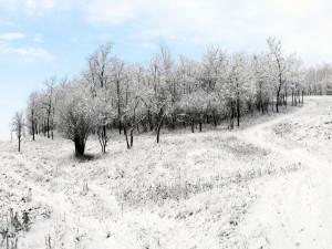 Árboles desnudos en el campo nevado