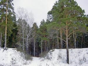 Postal: Nieve a la entrada de una arboleda