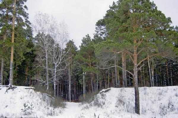 Nieve a la entrada de una arboleda