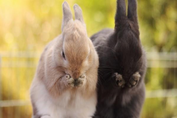 Dos divertidos conejos uno blanco y otro negro
