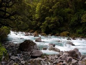 Un rápido río fluyendo en un bosque
