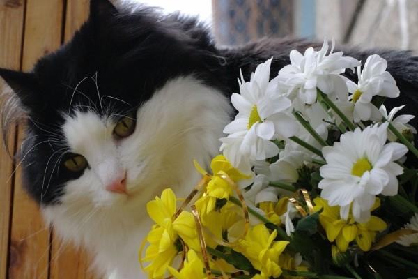 Un precioso gato observando las margaritas