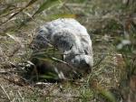 Ave dormida entre la hierba