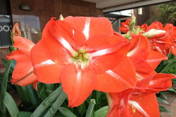 Hermosas flores rojas en un jardín
