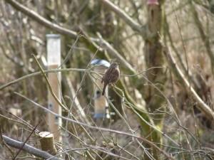 Un pájaro en las ramas desnudas de un árbol