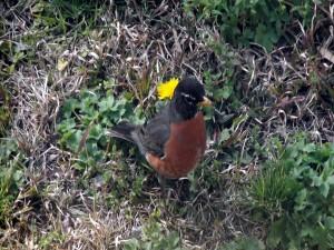 Pájaro junto a una flor amarilla
