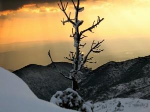 Árbol con nieve sobre una montaña