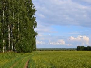 Camino junto a una pradera verde