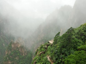 Un bello paisaje cubierto de niebla