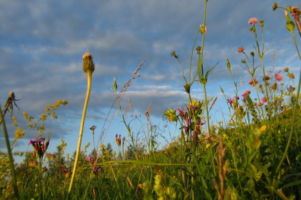 Flores y hierbas silvestres