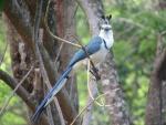 Un bonito pájaro azul y blanco sobre la rama de un árbol